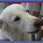 כלבה עם היפותירואידיזם