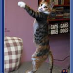 חתולה עם 3 רגליים