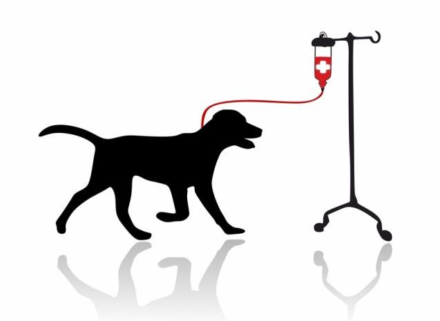 בנק דם לכלבים וחתולים