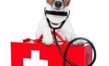 חירום וטיפול נמרץ