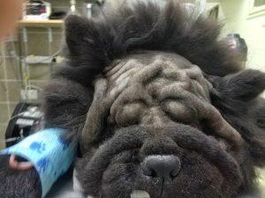 הצלת ראייה לכלב